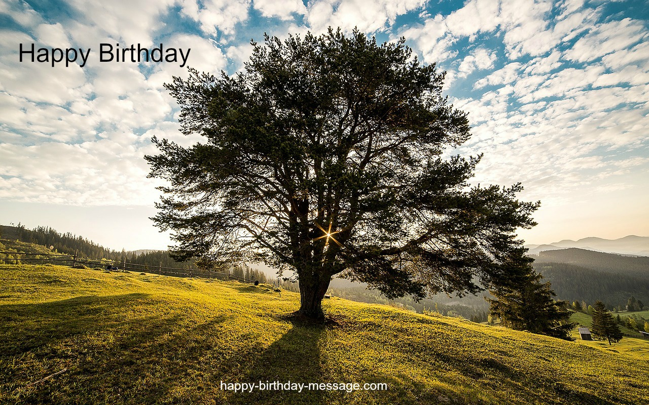 Birthday Tree